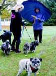TTT-Oct10-dogs